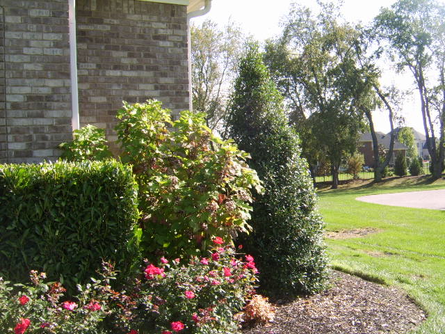 Spring Hill Tn Landscaping Front yard photo
